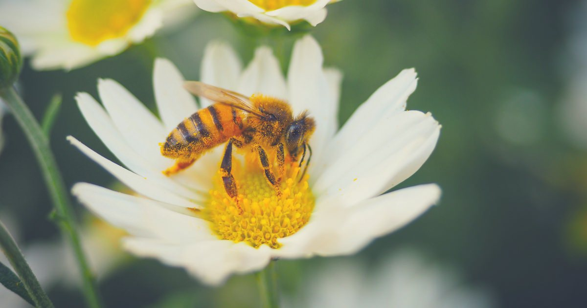 My Happy Footprint - Starbucks disposable cups - bee-harming pesticides - plastic soup